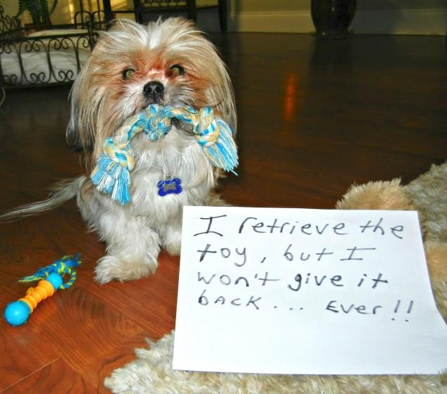 Bandits-dog-shaming-photo
