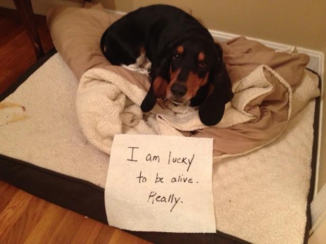 Coco-dog-shaming
