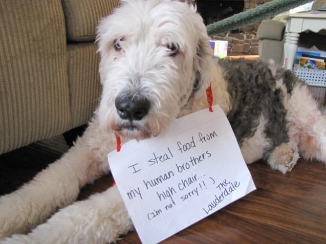Dog-Shame-004
