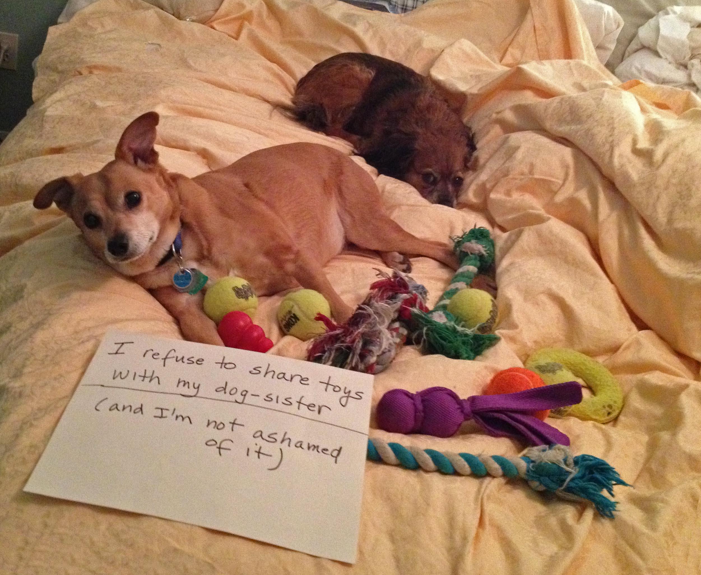 Dog hogging the bed - Dog Hogging The Bed 0