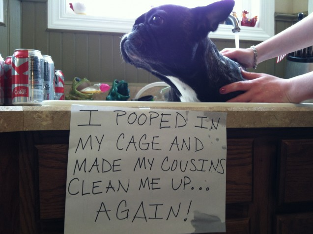 Lela-DogShaming