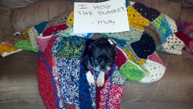 Molly-Blanket-Hog