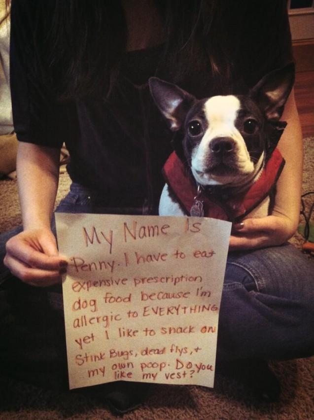 Penny-Shame