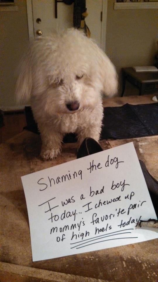 Shaming-Jack