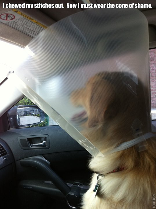 cone-of-shame-2