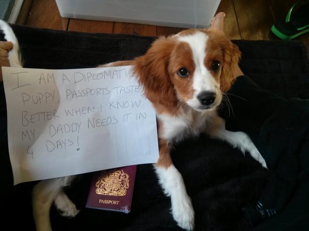 diplomatic-immunity-dog