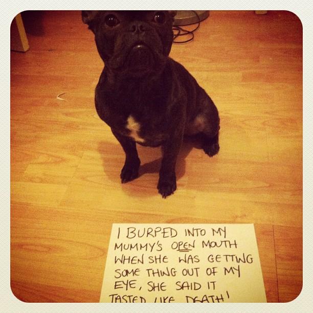 dog-shame1