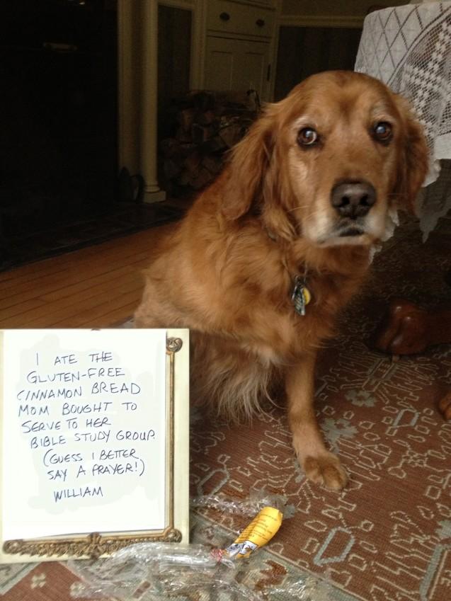 dog-shaming10