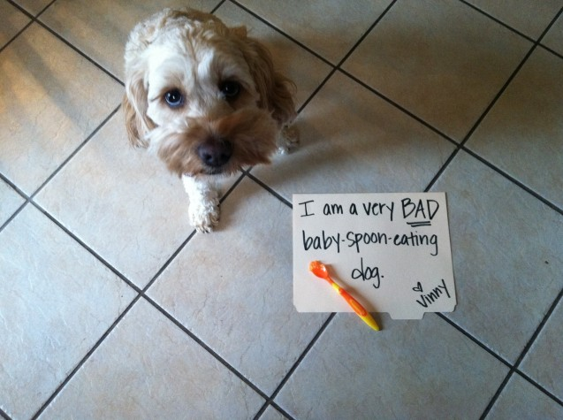 dogshaming7
