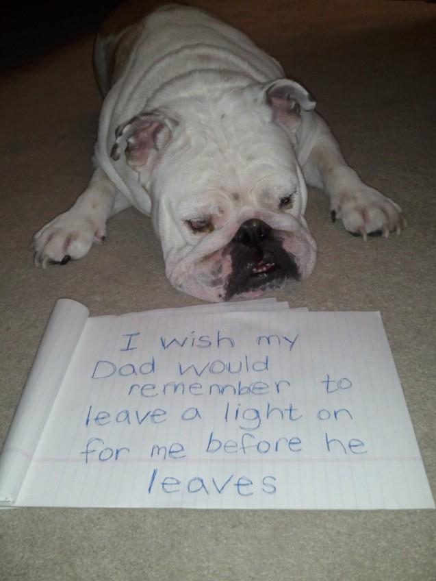 owner-shaming