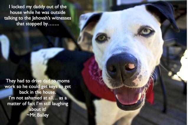 Baileys-shame