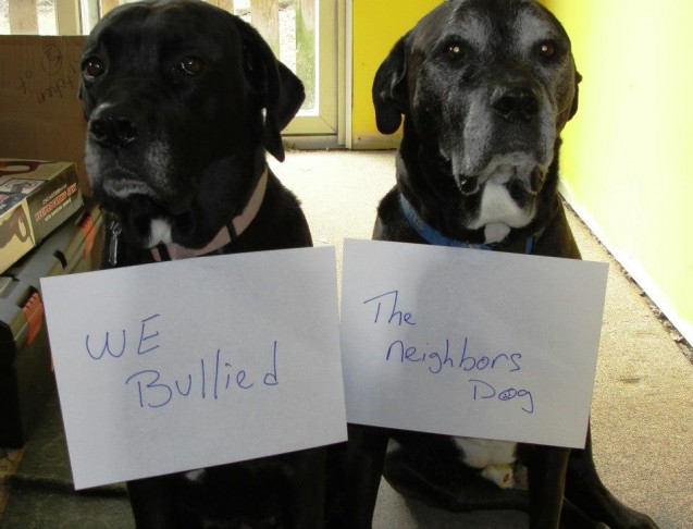 Big-Bully