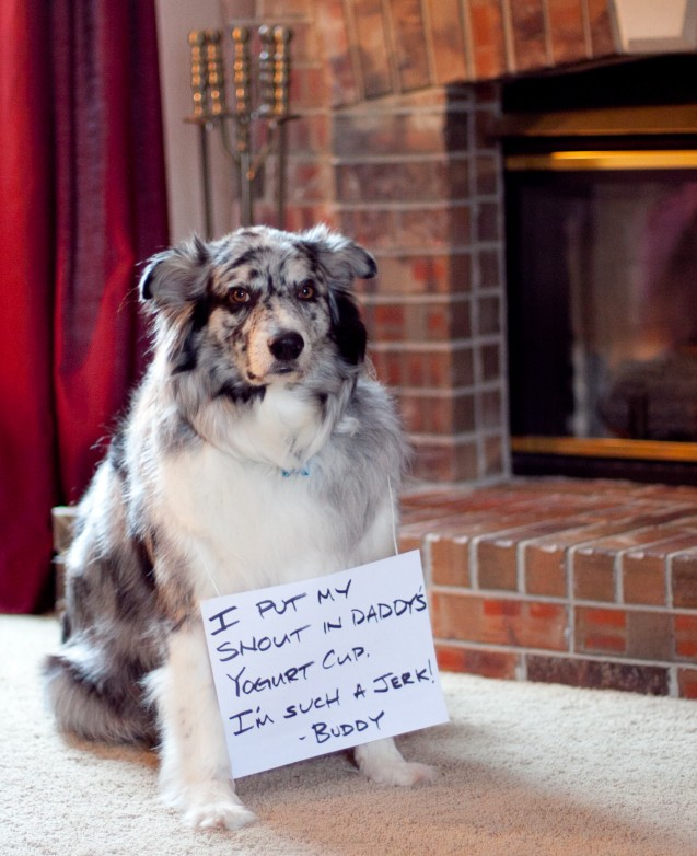 Buddy-Jr-shaming-March-2013