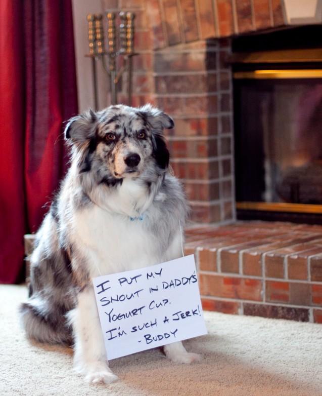 Buddy-Jr-shaming-March-2013