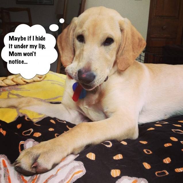 Dog-Shaming-Charlie