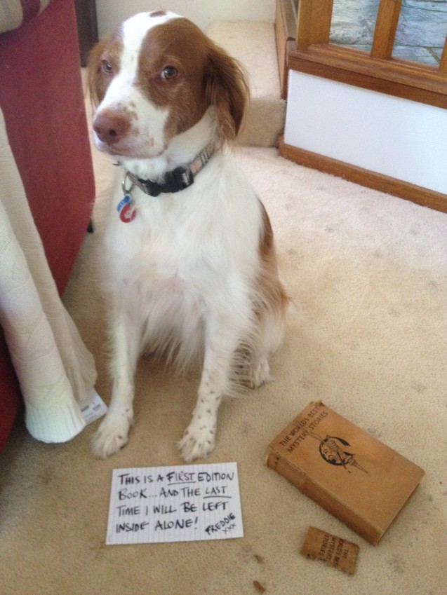 Dog-Shaming-Freddie