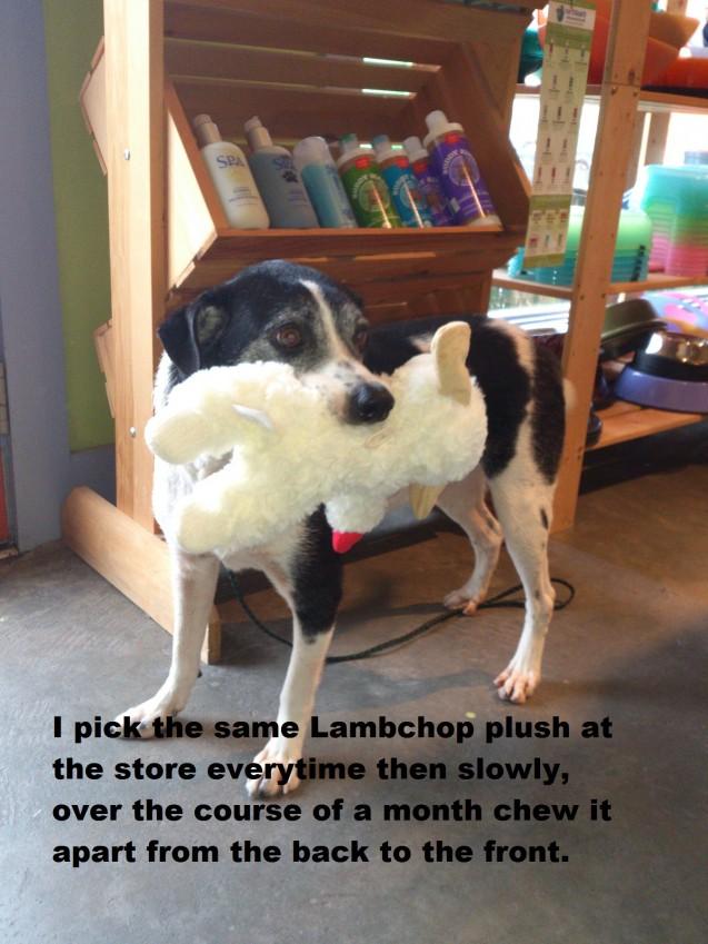 Lambchop-text