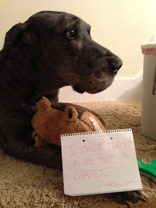 Great Dane Problems Dogshaming
