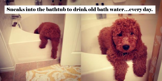 Rudy-Bathtub