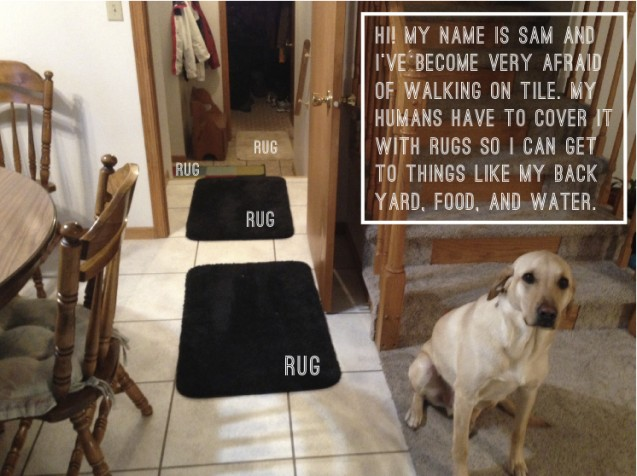 Sam And His Rugs