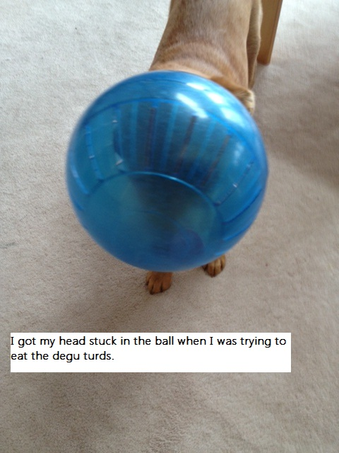dogshaming-penny