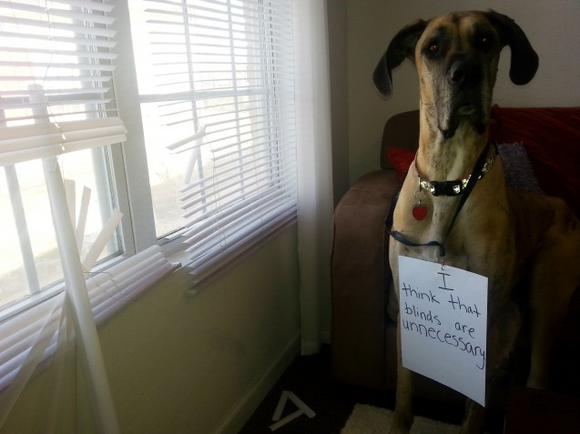 dogshaming2