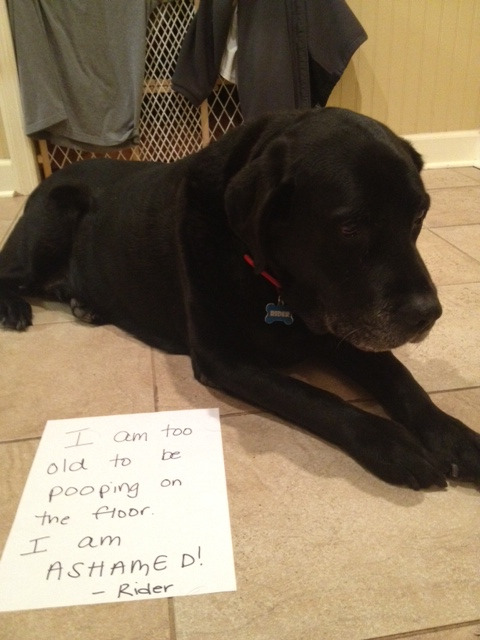 Dog Poops In House In Middle Of Night