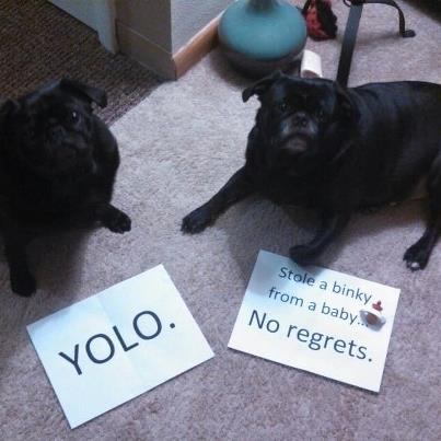 pug-shaming-1-Maxx-and-Pippin