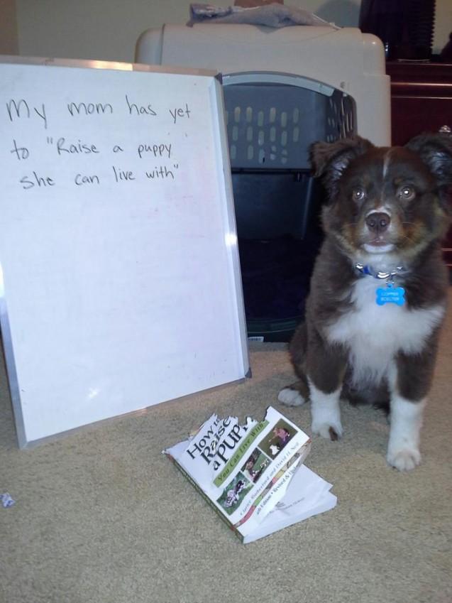 puppy-shame