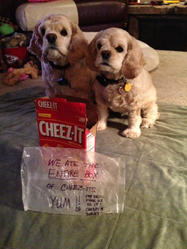 CHEEZ-ITS-YUM