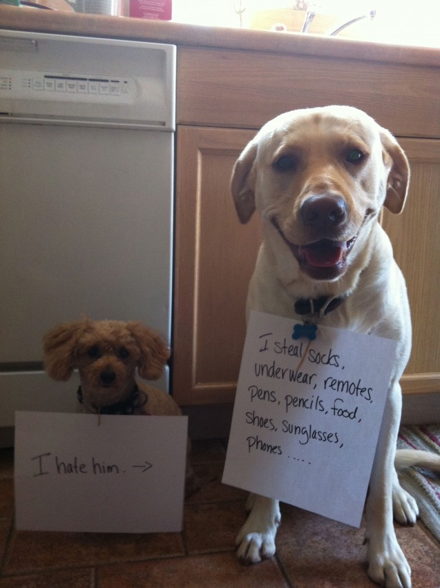 Lily-Hoagie-dog-shaming