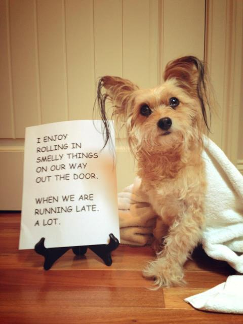 dogshaming12