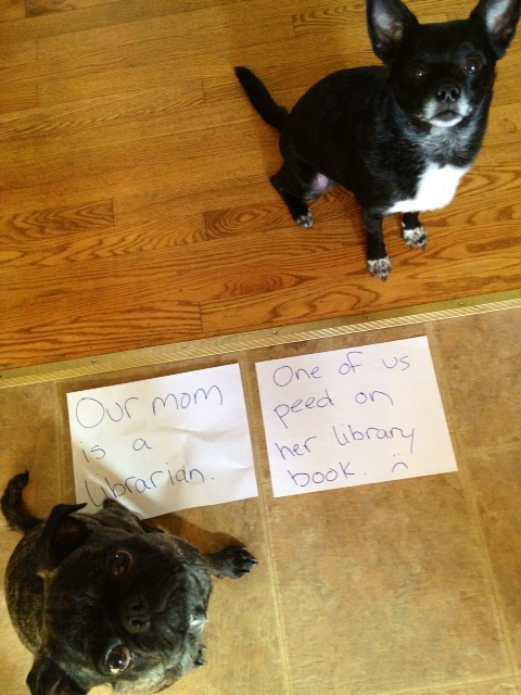 dogshaming_ujda