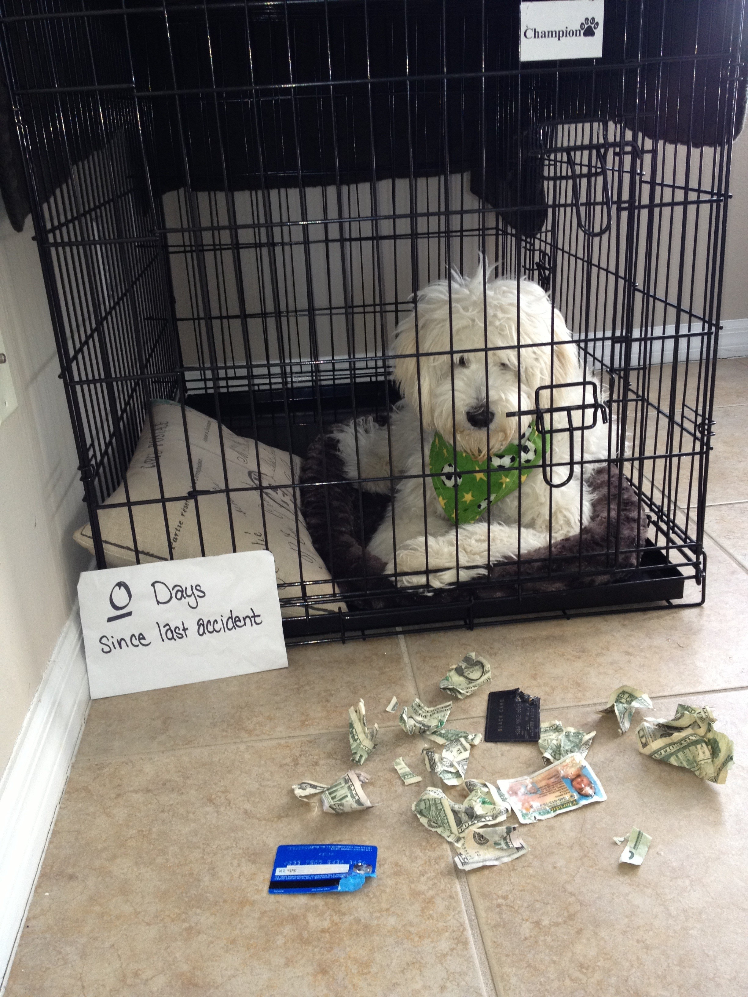 How to get your dog to poop money!!