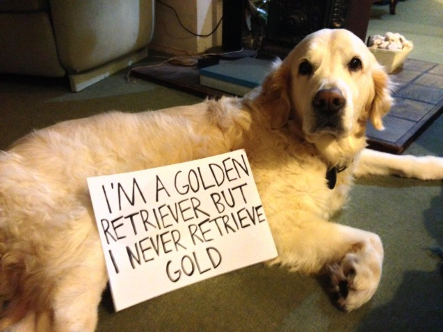 12 Hilarious  Guilty Golden Retrievers With Written Notes That Will Make Your Day!