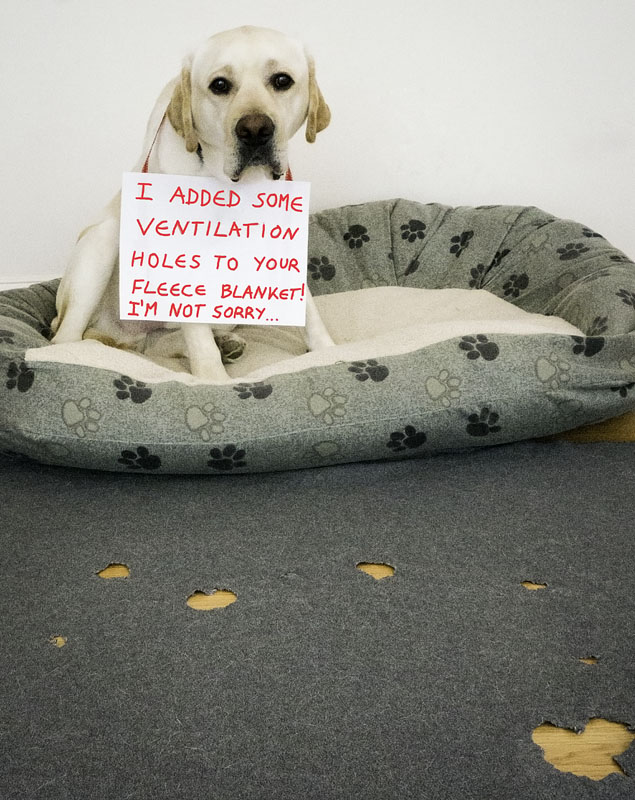 Flash-dogshaming