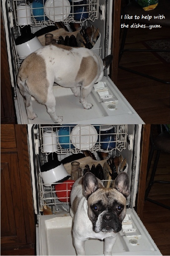 Fletch-Helps-with-Dishes