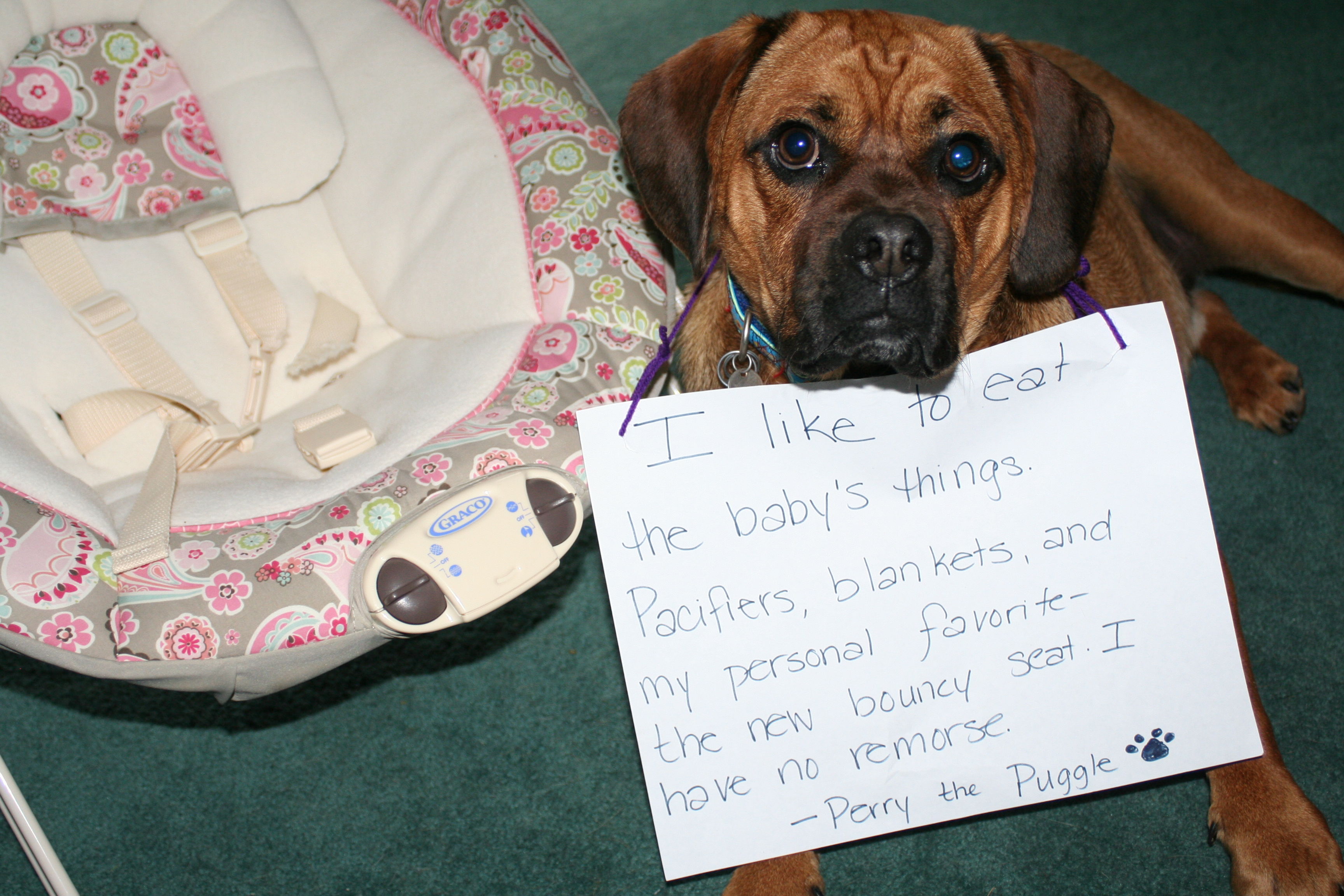 Dog And Human Mix Dogshaming.com