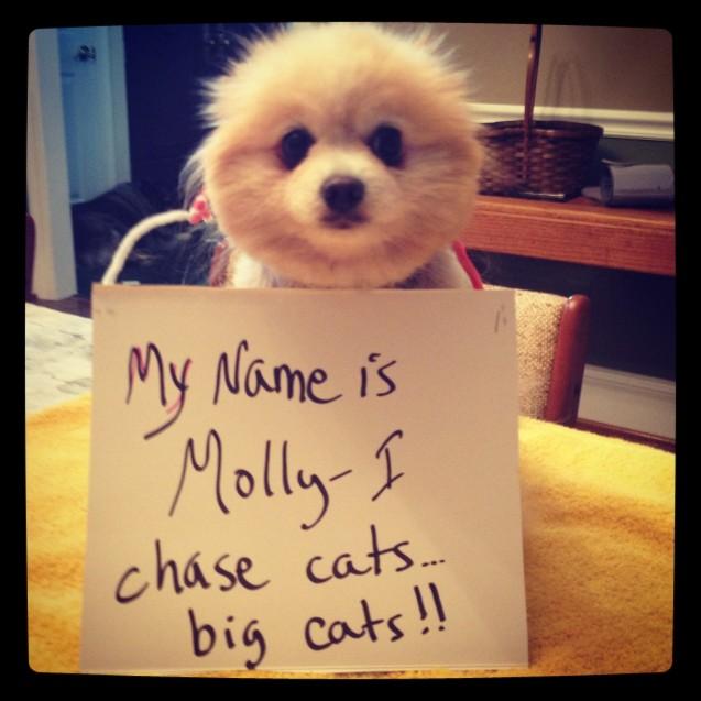 Molly-2-61013