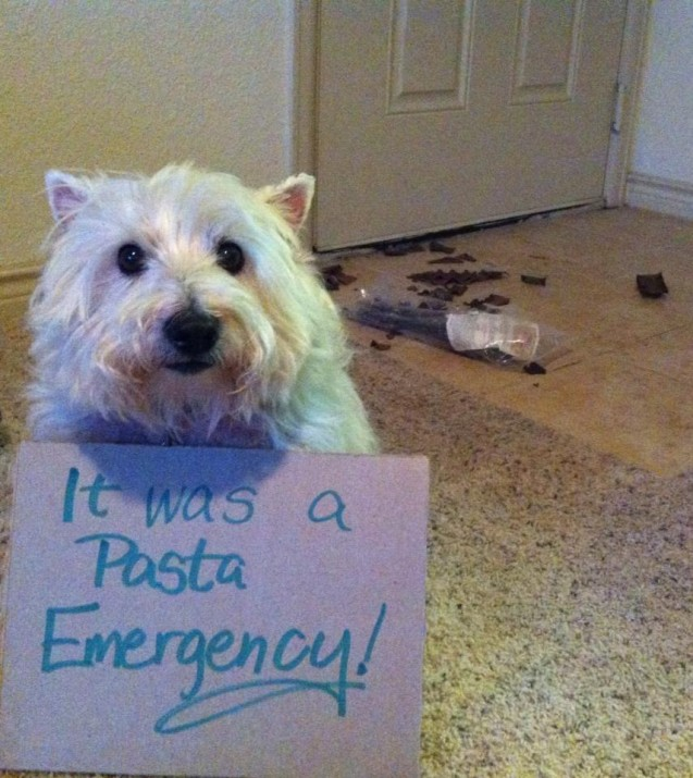Morgie-Pasta-Emergency