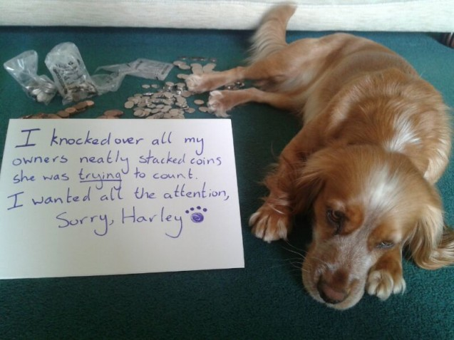dog-shamed