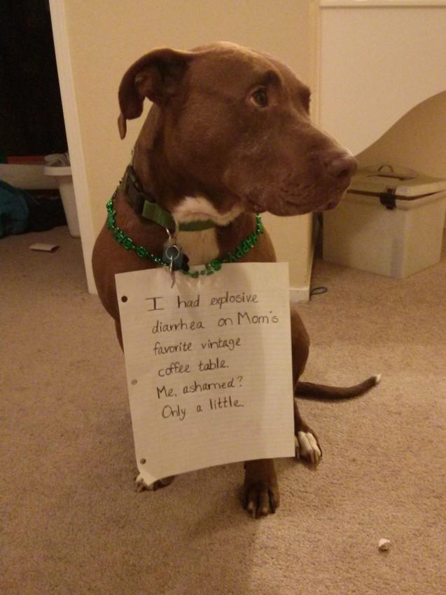 dog-shaming-11