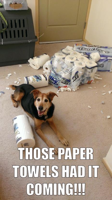 dog-shaming5