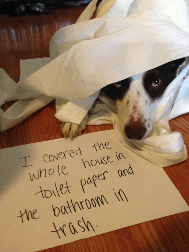 found on Dog Shaming