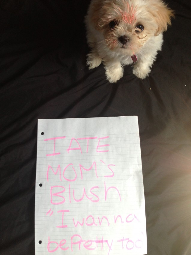 My Dog Ate Poop Will He Get Sick