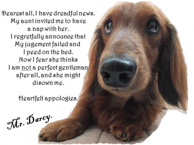 mr-darcy-shaming