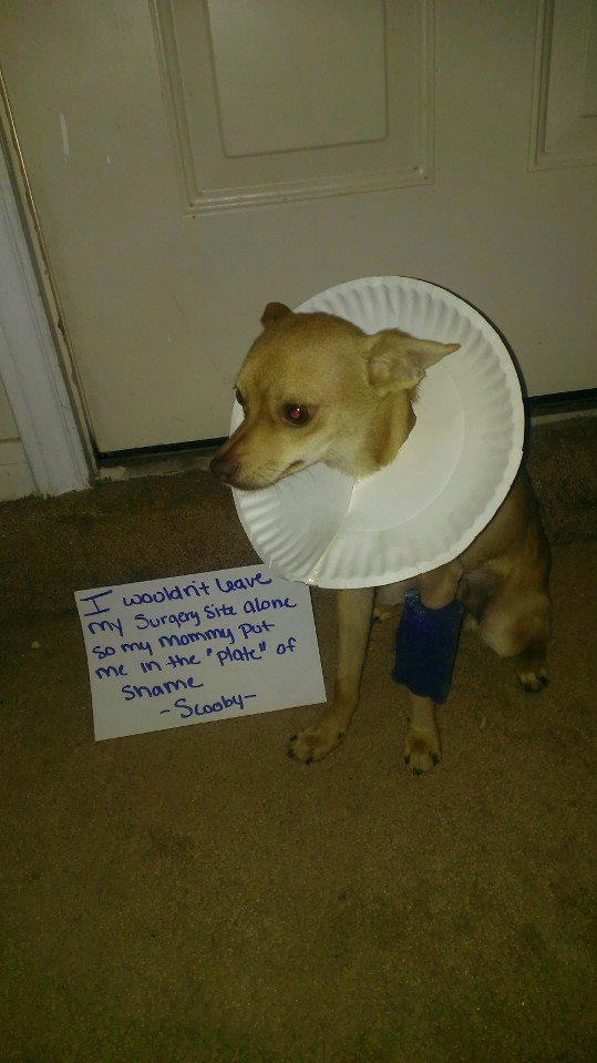 Another use for a paper plate: humiliation