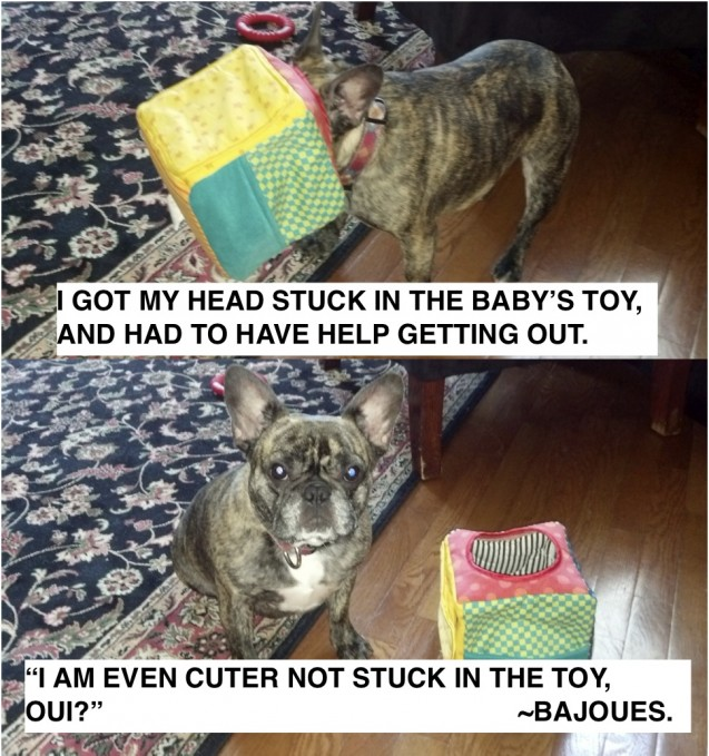 Bajoues-Dog-Shaming