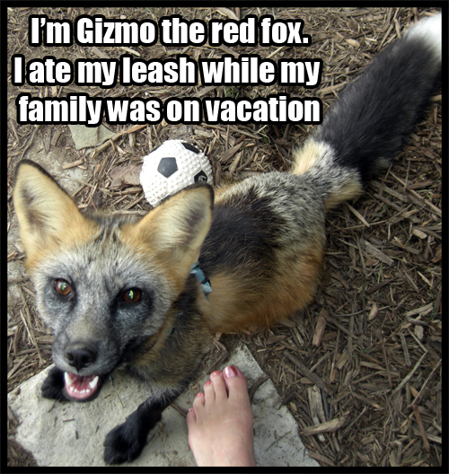 FoxShaming