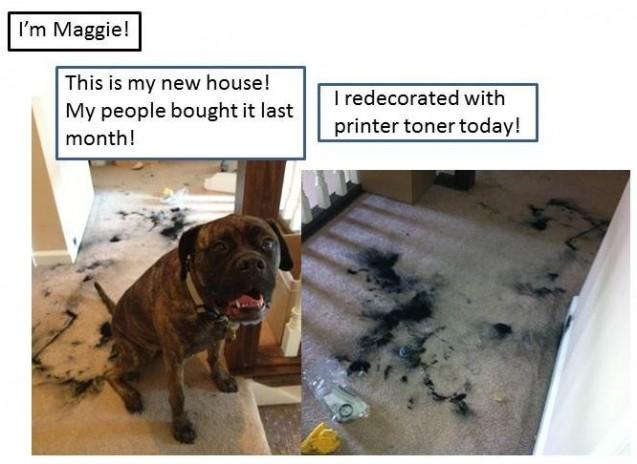 Maggie-Dogshaming